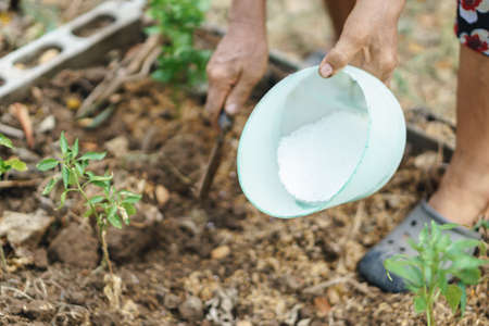 chemical fertilizer: Hand planting a small  plant with chemical fertilizer
