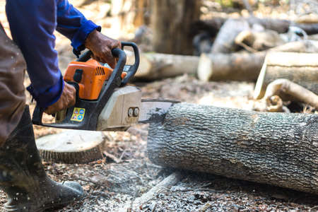 sawing: Sawing tamarind wood with chainsaw