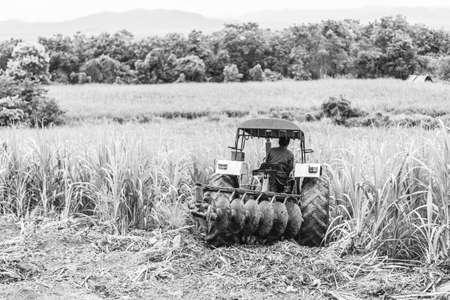 sugar cane farm: Tractor survaying sugar cane field farm Stock Photo