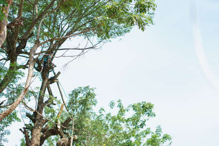 tree service: A man doing tree cut service for preparing path for road construction