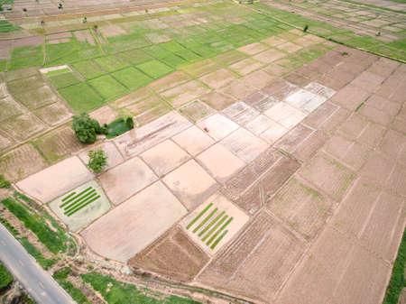 harvest field: Aerial shot of harvest field