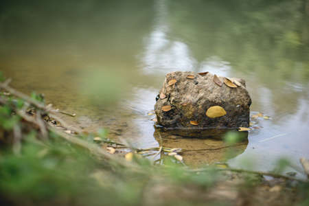 A rock stuck with leaves in clear water
