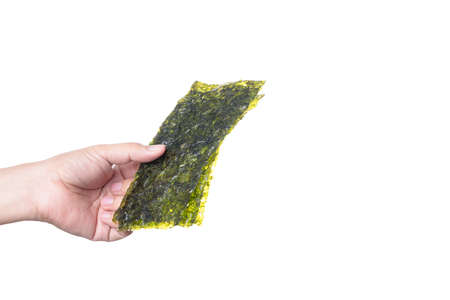 Hand holding Nori, sheet of dried seaweed, a healthy snack on white background