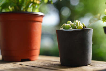 Small plant pot at the wooden balcony with green blur nature background 版權商用圖片