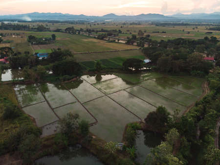 Flooded paddy field for rice plant as sustainable agriculture at Asian countryside