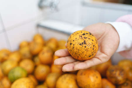 Dirty oranges with stains and dark spots 版權商用圖片 - 118715491