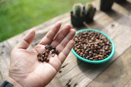 Hand holding coffee beans in various stage of roasting level from raw to dark type