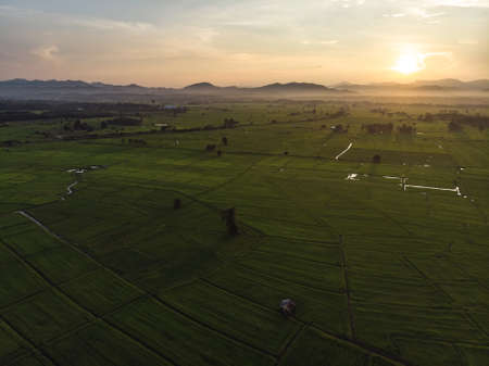 Sunset at agriculture green rice field in Asian country