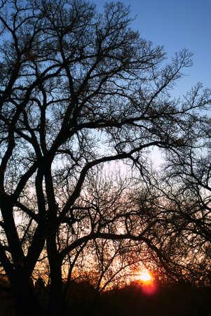 Sunset On Bare Trees