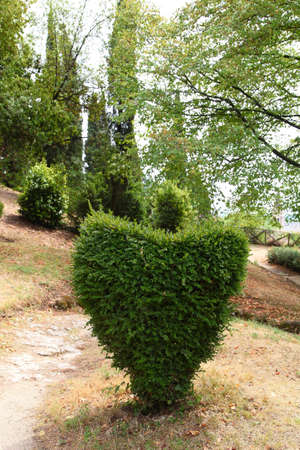 shrubs: Heart of boxwood shrubs Stock Photo