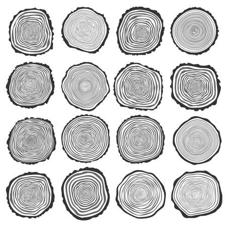 cross section of tree: Collection of vector tree rings background and saw cut tree trunk. Conceptual graphics.