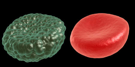 erythrocytes: Green illness and red blood cell
