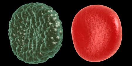hemorragias: verde y la enfermedad de los glóbulos rojos