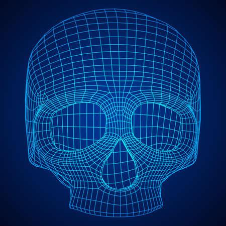 Skull wire frame illustration.