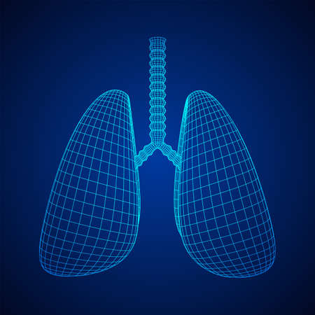 Lungs with trachea bronchi internal organ human. Pulmonology medicine science technology concept. Wireframe low poly mesh vector illustration Фото со стока