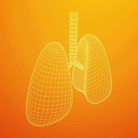 Lungs with trachea bronchi internal organ human. Pulmonology medicine science technology concept. Wireframe low poly mesh vector illustration Vector Illustratie