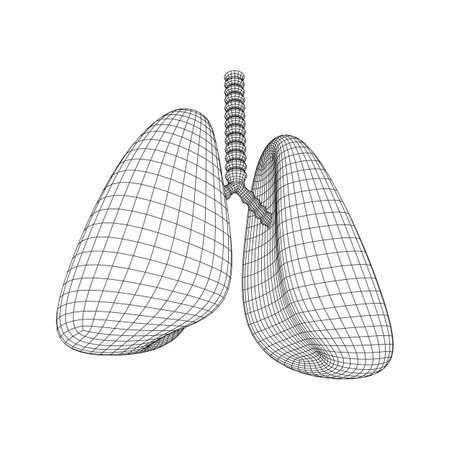 Lungs with trachea bronchi internal organ human. Pulmonology medicine science technology concept. Wireframe low poly mesh vector illustration Ilustracja