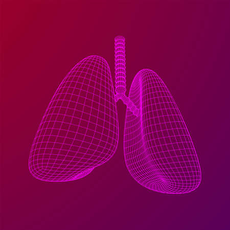 Lungs with trachea bronchi internal organ human. Pulmonology medicine science technology concept. Wireframe low poly mesh vector illustration Banque d'images - 137801108