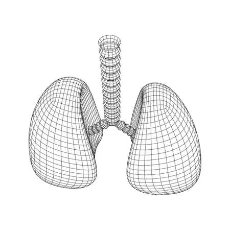 Lungs with trachea bronchi internal organ human. Pulmonology medicine science technology concept. Wireframe low poly mesh vector illustration Banque d'images - 137892320