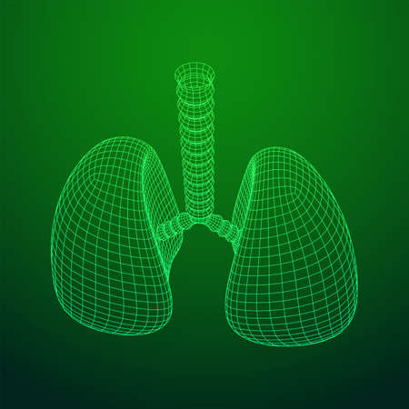 Lungs with trachea bronchi internal organ human. Pulmonology medicine science technology concept. Wireframe low poly mesh vector illustration Banque d'images - 138115965