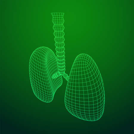 Lungs with trachea bronchi internal organ human. Pulmonology medicine science technology concept. Wireframe low poly mesh vector illustration Ilustração