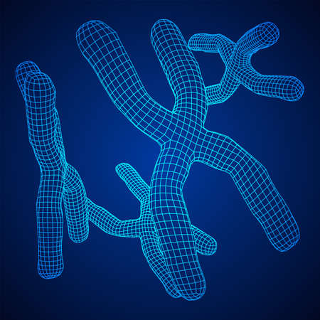 Chromosome scientific medicine education concept. Wireframe low poly mesh vector illustration