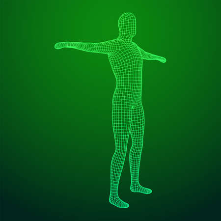 Male or man anatomy. Body biology medicine education concept. Wireframe low poly mesh vector illustration Vektoros illusztráció
