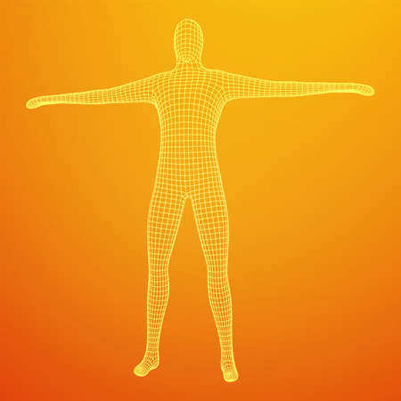 Male or man anatomy. Body biology medicine education concept. Wireframe low poly mesh vector illustration