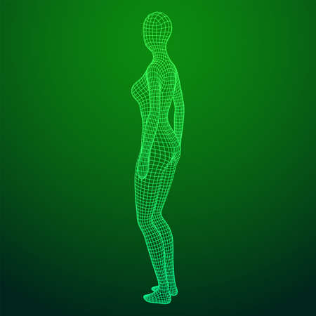 Female or woman anatomy. Body biology medicine education concept. Wireframe low poly mesh vector illustration.