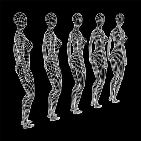 Female or woman queue. Body biology medicine education concept. Wireframe low poly mesh vector illustration. Illustration