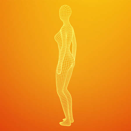Female or woman anatomy. Body biology medicine education concept. Wireframe low poly mesh vector illustration. Vektorgrafik
