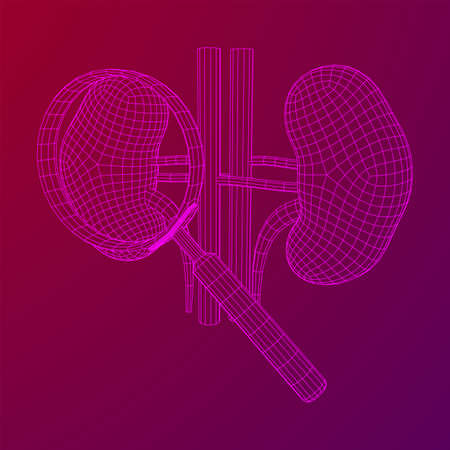 Kidneys human anatomy internal organ with magnifying glass. Medicine science technology concept. Wireframe low poly mesh vector illustration