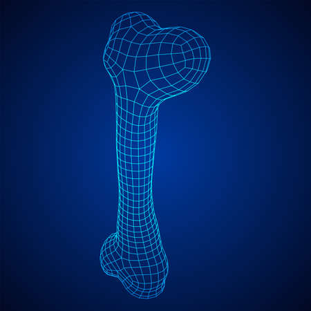 Anatomy Dog Bone object. Wireframe low poly mesh Ilustración de vector