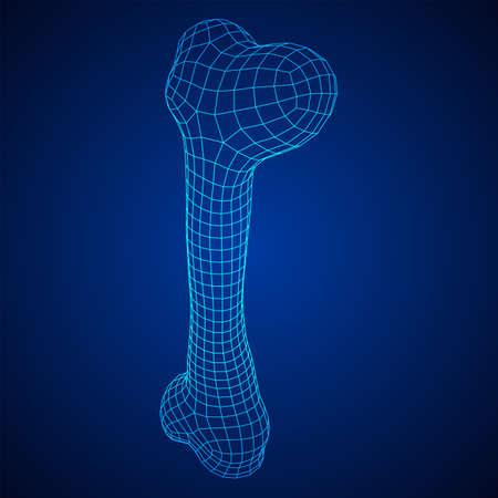 Anatomy Dog Bone object. Wireframe low poly mesh Vecteurs