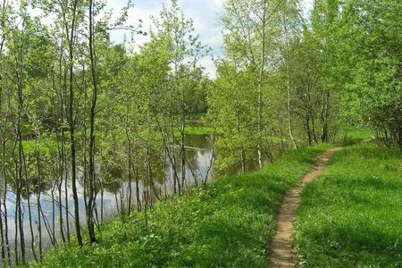 Landscape with small river and birches