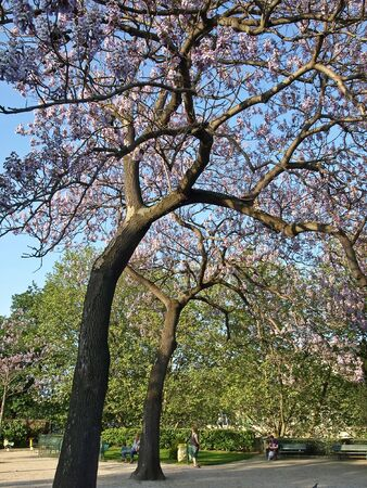 bloomy: Prime trees in a city park Stock Photo