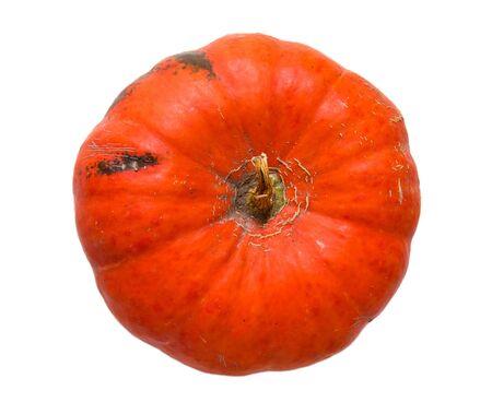 giant mushroom: Orange big pumpkin isolated on white background