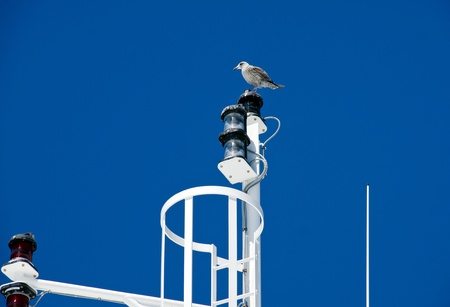 Big white seagull in blue sky contrast background photo