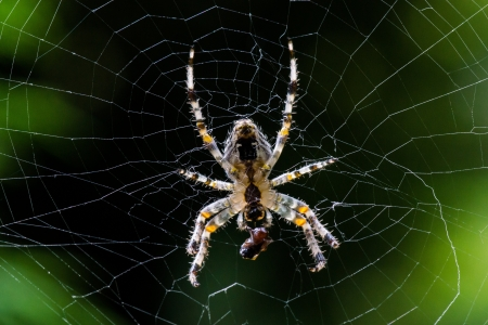Big spider in its web. Night view in a garden. Stock Photo - 16461139