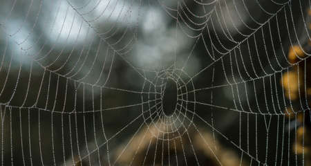 spider net: Spider net with water drops. Autumn morning in a garden. Stock Photo