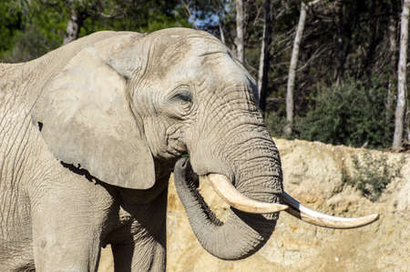 Beautiful elephant in safari park, Sigean, France Stock Photo