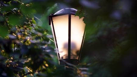 Street lamp illuminated by evening sun. Park. Outdoor. photo