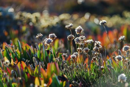 Field of beautiful wild flowers in rocky area of Portugal photo