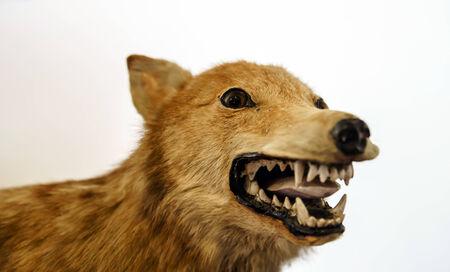 自然、ベルギーの博物館で野生動物のぬいぐるみ 写真素材