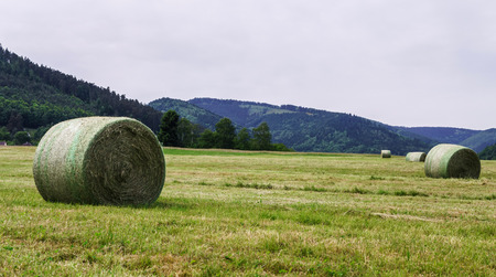 Rolling field stacks in Alsace hills, spring time photo