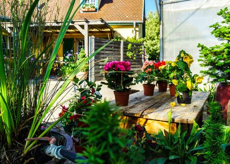 hothouse: Sunny hothouse in a little farm of plants, France