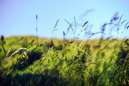 fields of flowers: Wild grass and flowers fields, countryside, nature concept Stock Photo