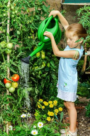 bailer: Cute little girl helping her mother - watering tomato and flowers in the backyard.