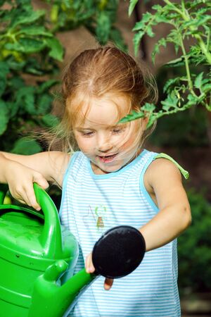 garden staff: Cute little girl helping her mother - watering tomato and flowers in the backyard.