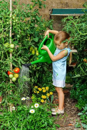 helpmate: Cute little girl helping her mother - watering tomato and flowers in the backyard.